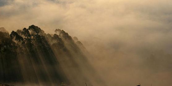 fog two