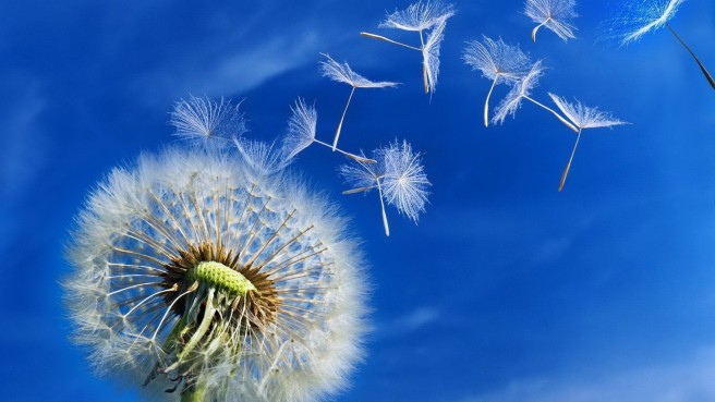 Beautiful-dandelion-puff-in-the-wind-HD-spring-wallpaper_1920x1080