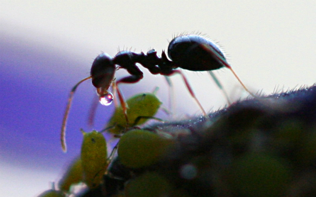 photo by Davidi. Mountain Ants Tamara Madison