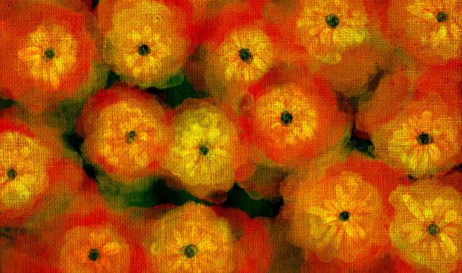 flowers_by_frogstar_23_dcd3rml-pre