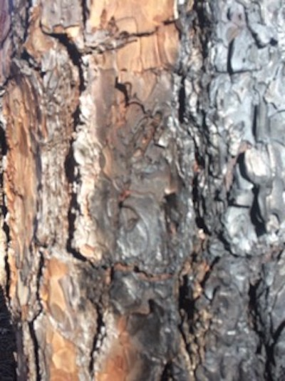 Burned Trunk 1