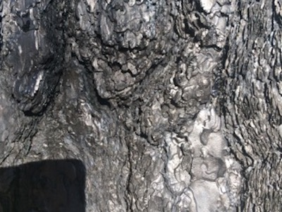Burned Trunk 3