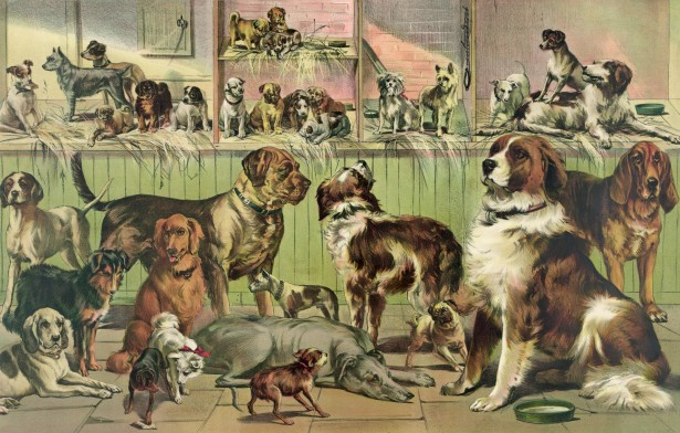 vintage-kennel-club-dogs